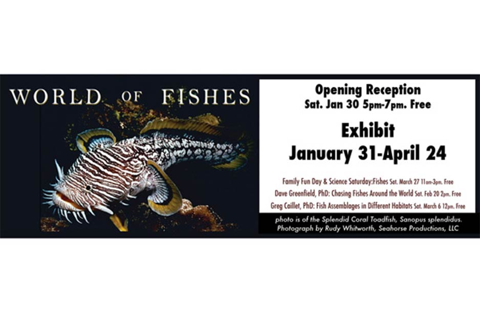 Trucksis Flag & Banner World of Fishes print