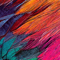 Feather texture printed on an LEF2-300